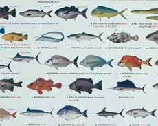 Photo of guide to Australian fishes display