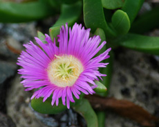 Photo of wild flower with purple petals