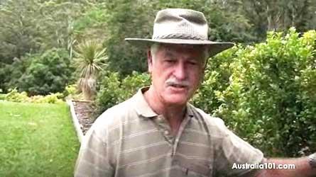 News Photo - Australia's versatile Lilly Pilly Tree