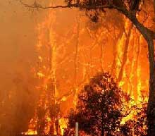 News Photo - Bush Fire Help